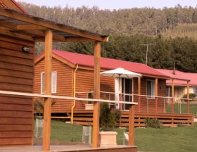 Maydena Country Cabins Accommodation  Alpaca Stud - Tourism Caloundra