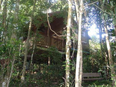 Adjinbilly Rainforest Retreat Cabins - Tourism Caloundra