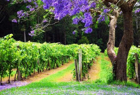 Bago Vineyards - Tourism Caloundra