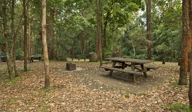Sheepstation Creek campground - Tourism Caloundra