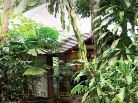 Heritage Lodge and Spa - In the Daintree