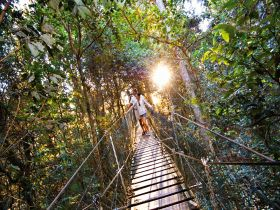 O'Reilly's Rainforest Retreat - Tourism Caloundra