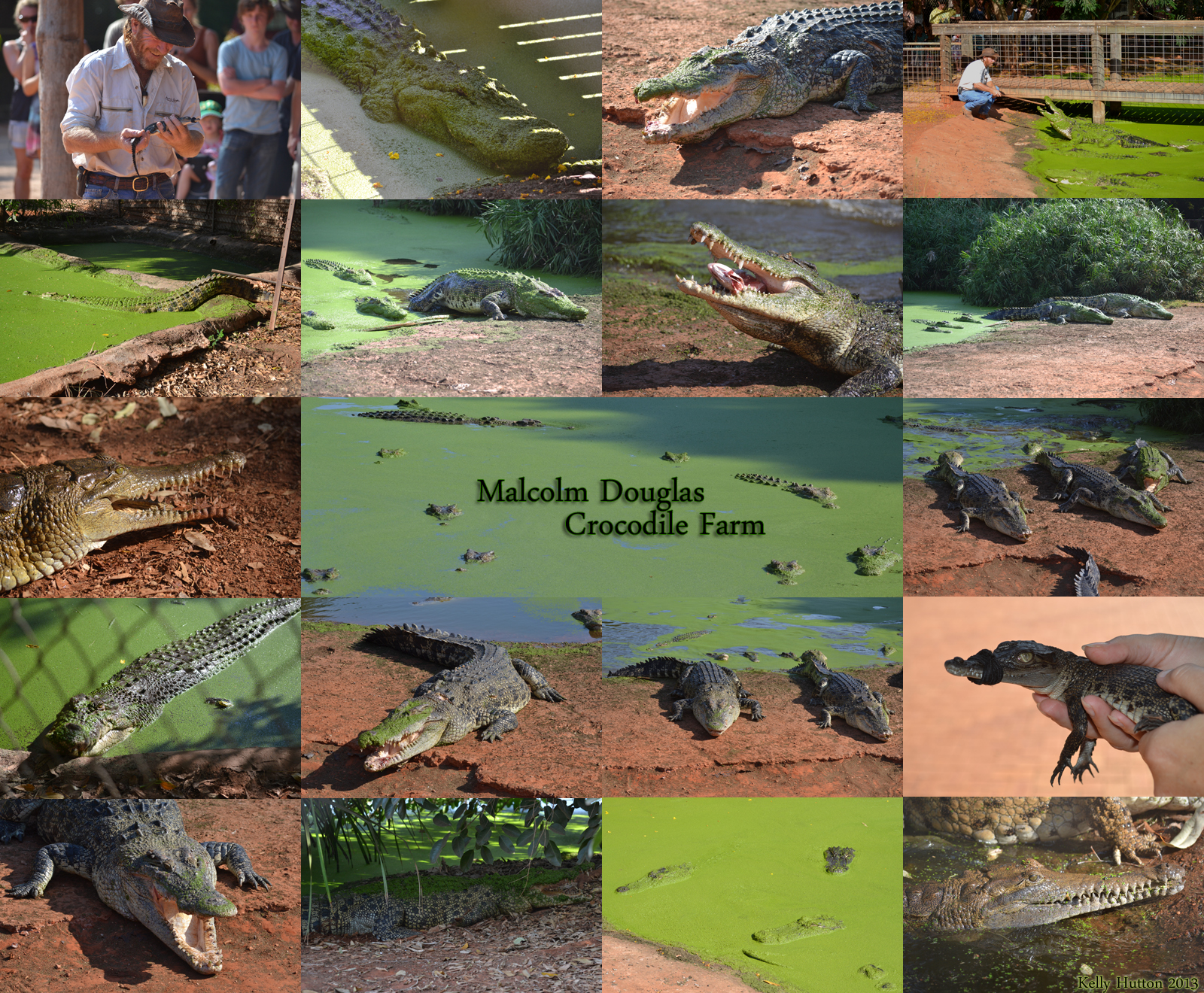 The Malcolm Douglas Crocodile Park - Tourism Caloundra