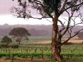 Yangarra Estate Vineyard - Tourism Caloundra