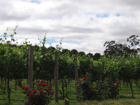 Manyara Vineyard - Tourism Caloundra