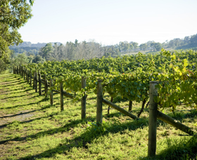 Surveyor's Hill Vineyards - Tourism Caloundra
