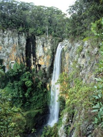 Gondwana Rainforests of Australia - Tourism Caloundra