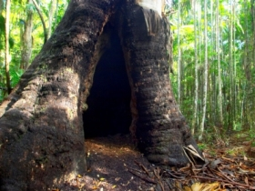 Tewantin National Park - Tourism Caloundra