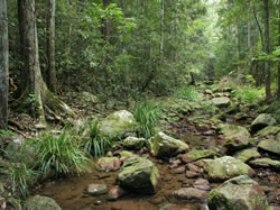 Amamoor State Forest - Tourism Caloundra