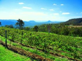 Preston Peak Wines - Tourism Caloundra