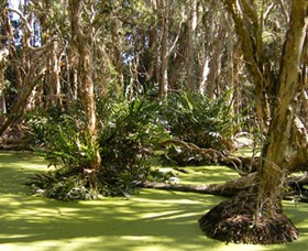 Arkarra Lagoons and Tea Gardens - Tourism Caloundra