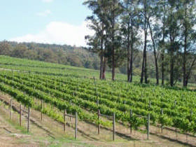 Piedmont Vineyard - Tourism Caloundra