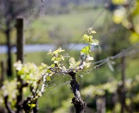 Mount Cole WineWorks - Tourism Caloundra