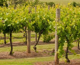 Mt Coghill Vineyard - Tourism Caloundra