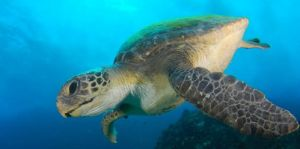 Byron Bay Dive Centre - Tourism Caloundra