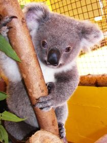 Cooberrie Park Wildlife Sanctuary - Tourism Caloundra