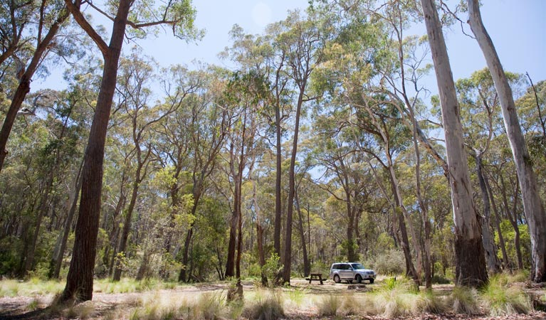 Coolah Tops National Park - Tourism Caloundra