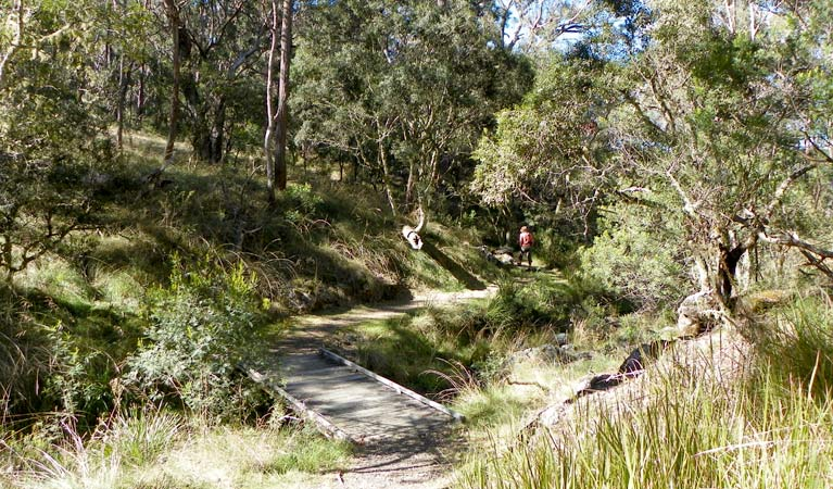 Wollomombi walking track - Tourism Caloundra