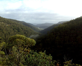 Nattai Gorge Lookout