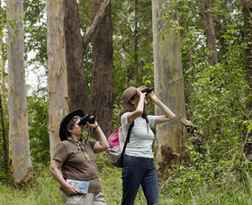 Chichester State Forest - Tourism Caloundra