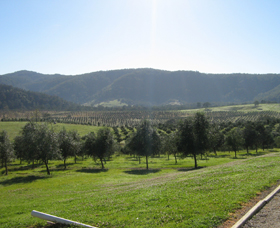 Hastings Valley Olives - Tourism Caloundra