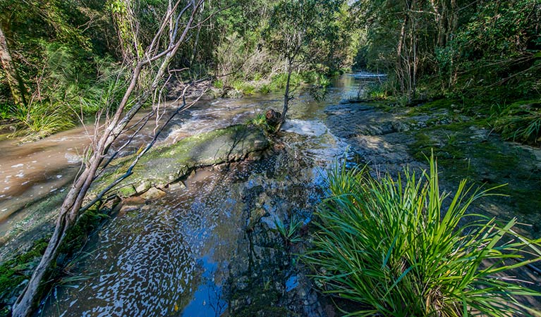 Dawson River walking track - Tourism Caloundra