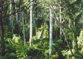 Lind National Park - Tourism Caloundra