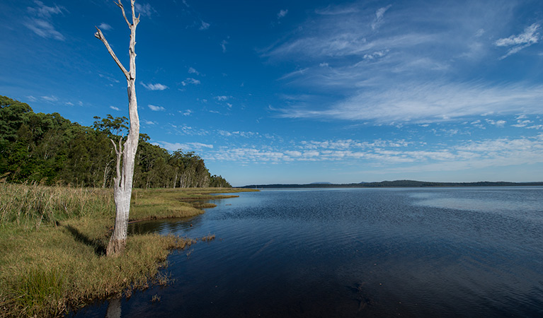 Lake Innes Nature Reserve - Tourism Caloundra