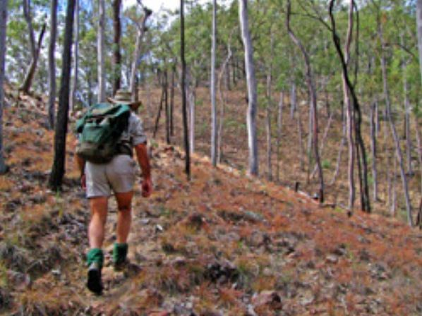 Shepherd's Peak Trail - Tourism Caloundra