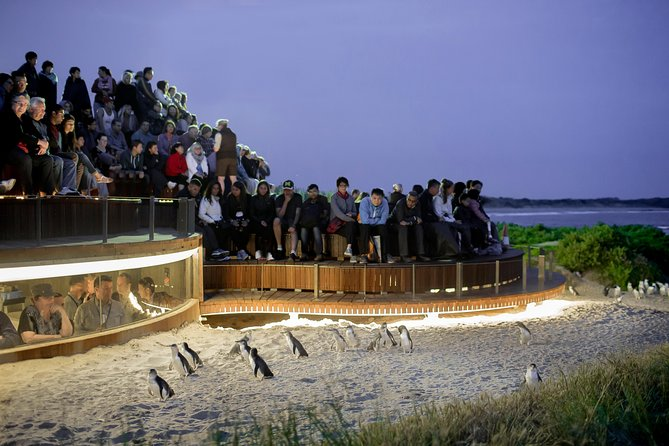 1 Day Private Phillip Island Tour VIP Charter up to 9 People - Tourism Caloundra