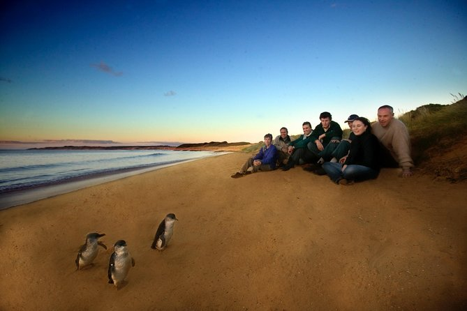 Phillip Island Ultimate Penguin Eco Tour or Skybox Experience - Tourism Caloundra