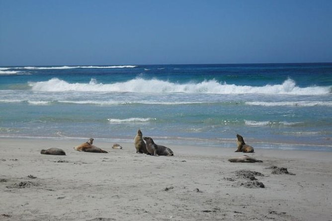 Kangaroo Island in a Day Tour from Adelaide - Tourism Caloundra