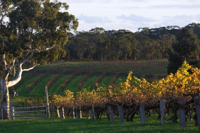 Barossa Valley with Hahndorf Tour from Adelaide - Tourism Caloundra