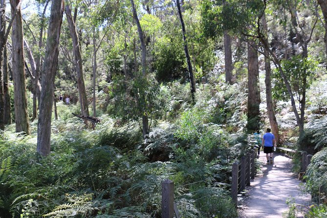 Self-Guided Waterfall Gully to Mount Lofty Hike from Adelaide - Tourism Caloundra