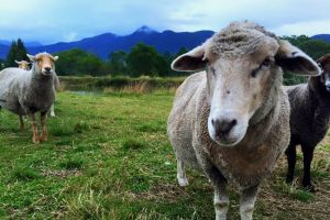 Trevena Glen Farm Animal Experience - Tourism Caloundra
