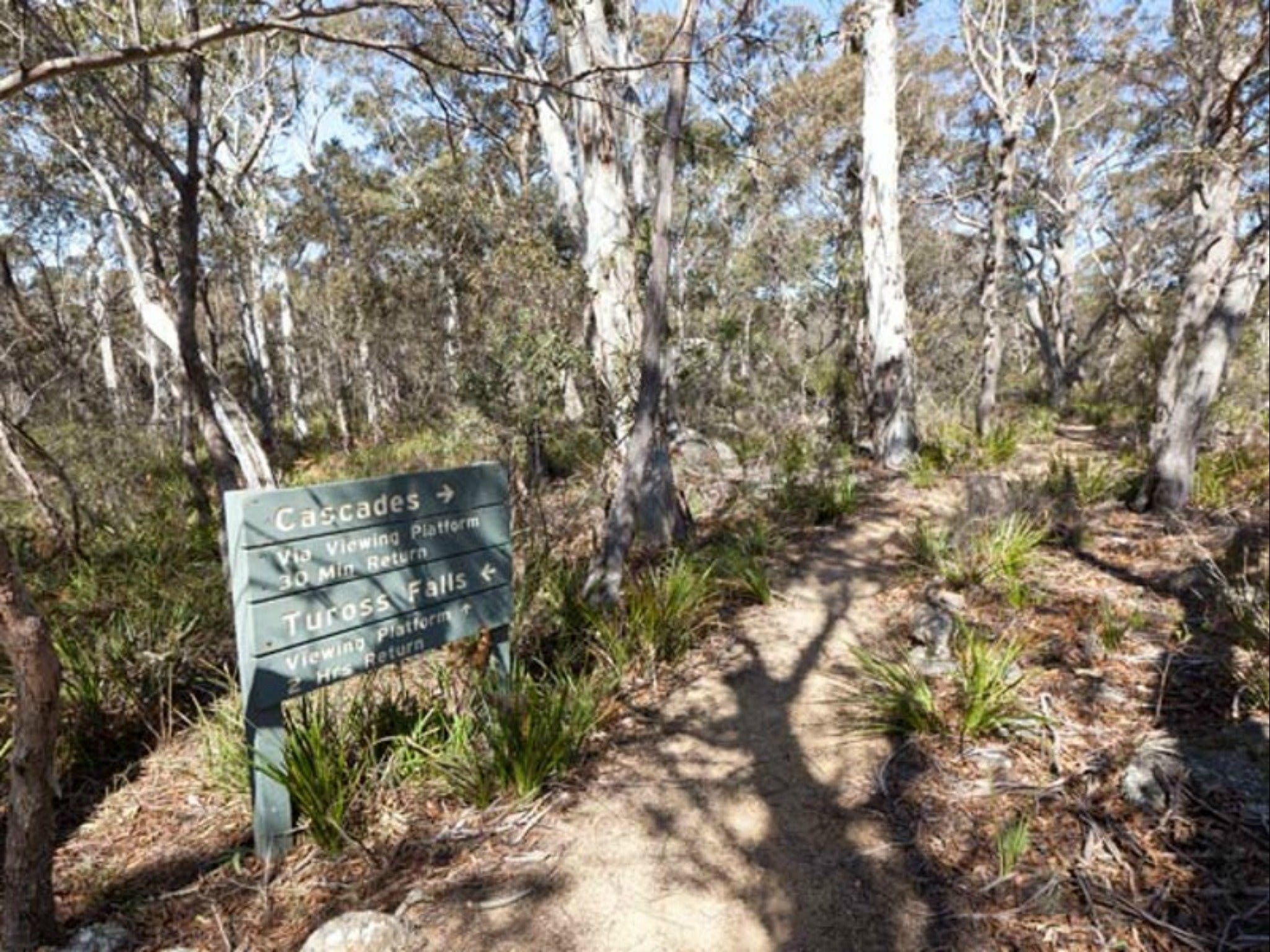 Cascades walking track and viewing platform - Tourism Caloundra