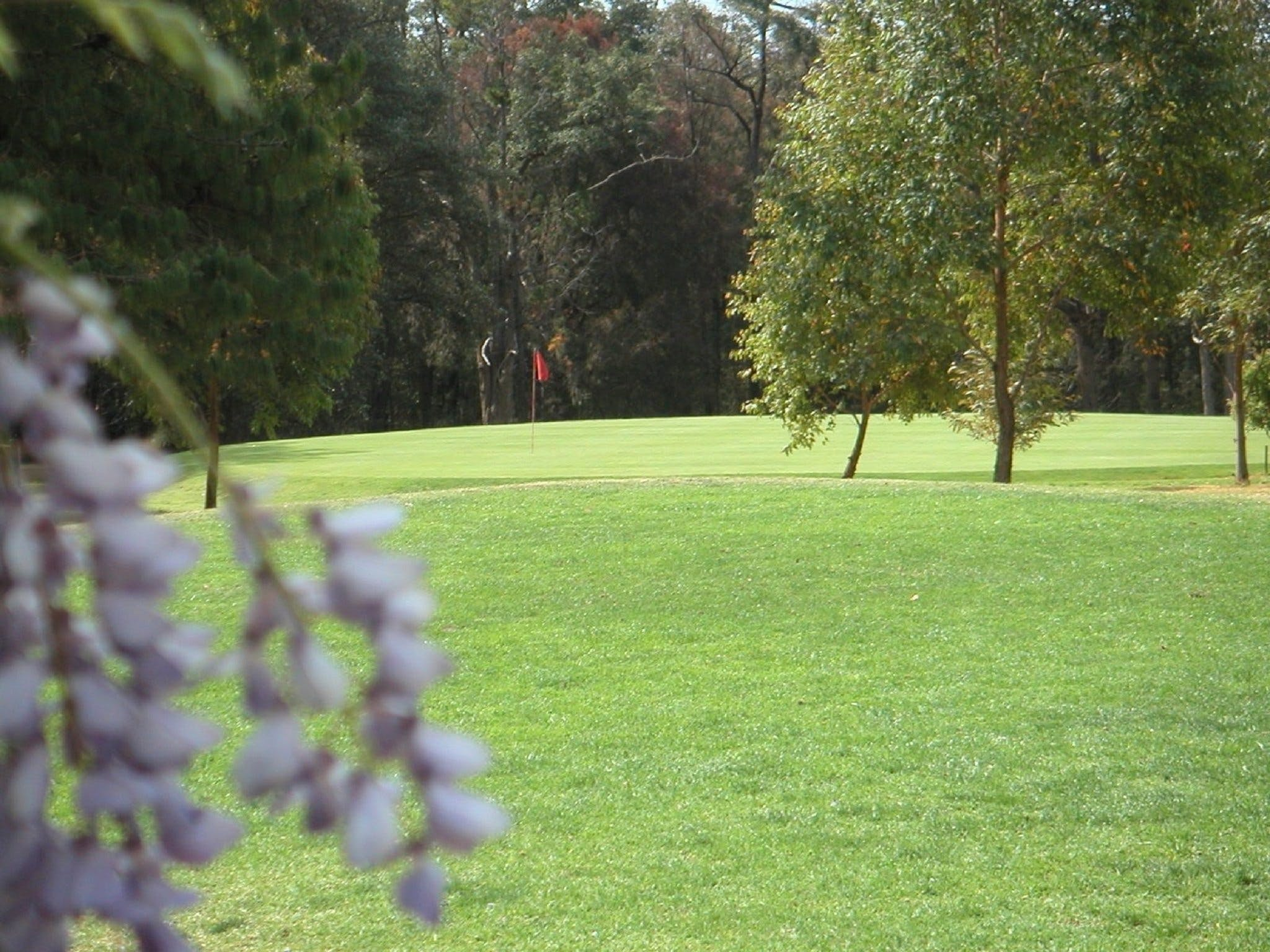 Springwood Country Club - Tourism Caloundra