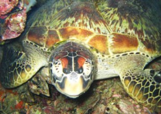 Adrenalin Snorkel and Dive - Tourism Caloundra