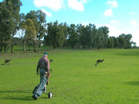 Coffin Bay Golf Club - Tourism Caloundra