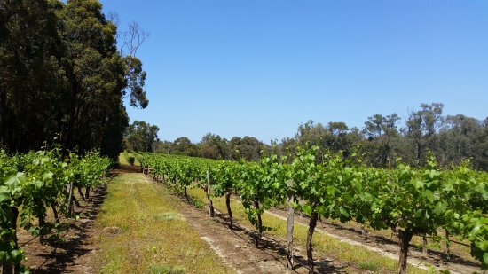 Stringybark Cottage Winery  Restaurant - Tourism Caloundra